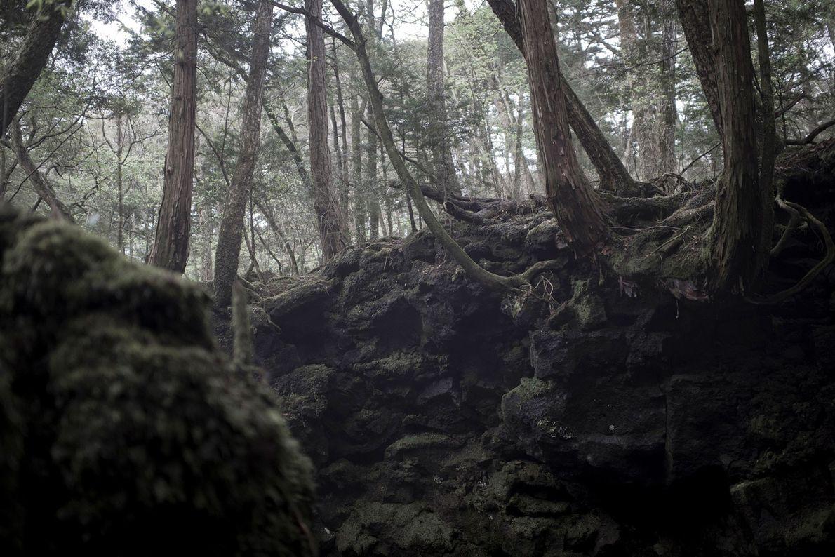 Forêt Aokigahara, Japon -Longtemps associée aux fantômes des défunts dans la littérature et le folklore japonais, ...