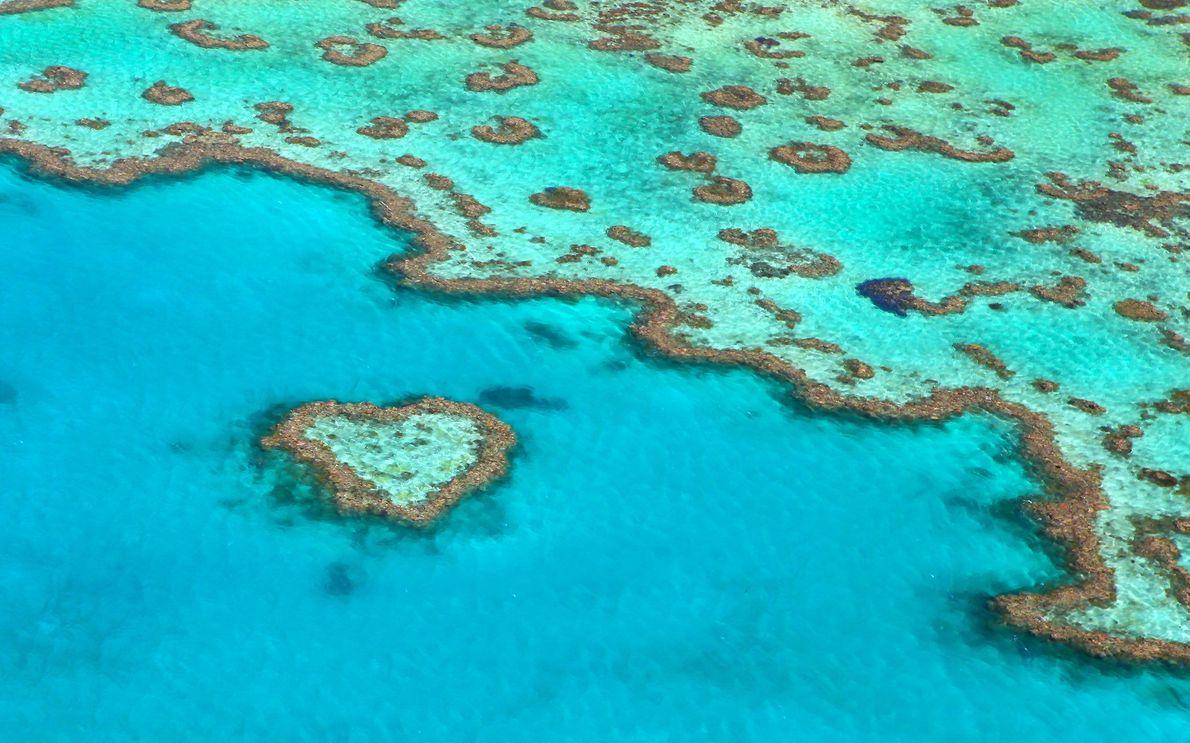 Vous devrez réserver un hélicoptère ou un hydravion pour survoler et admirer le récif du cœur ...