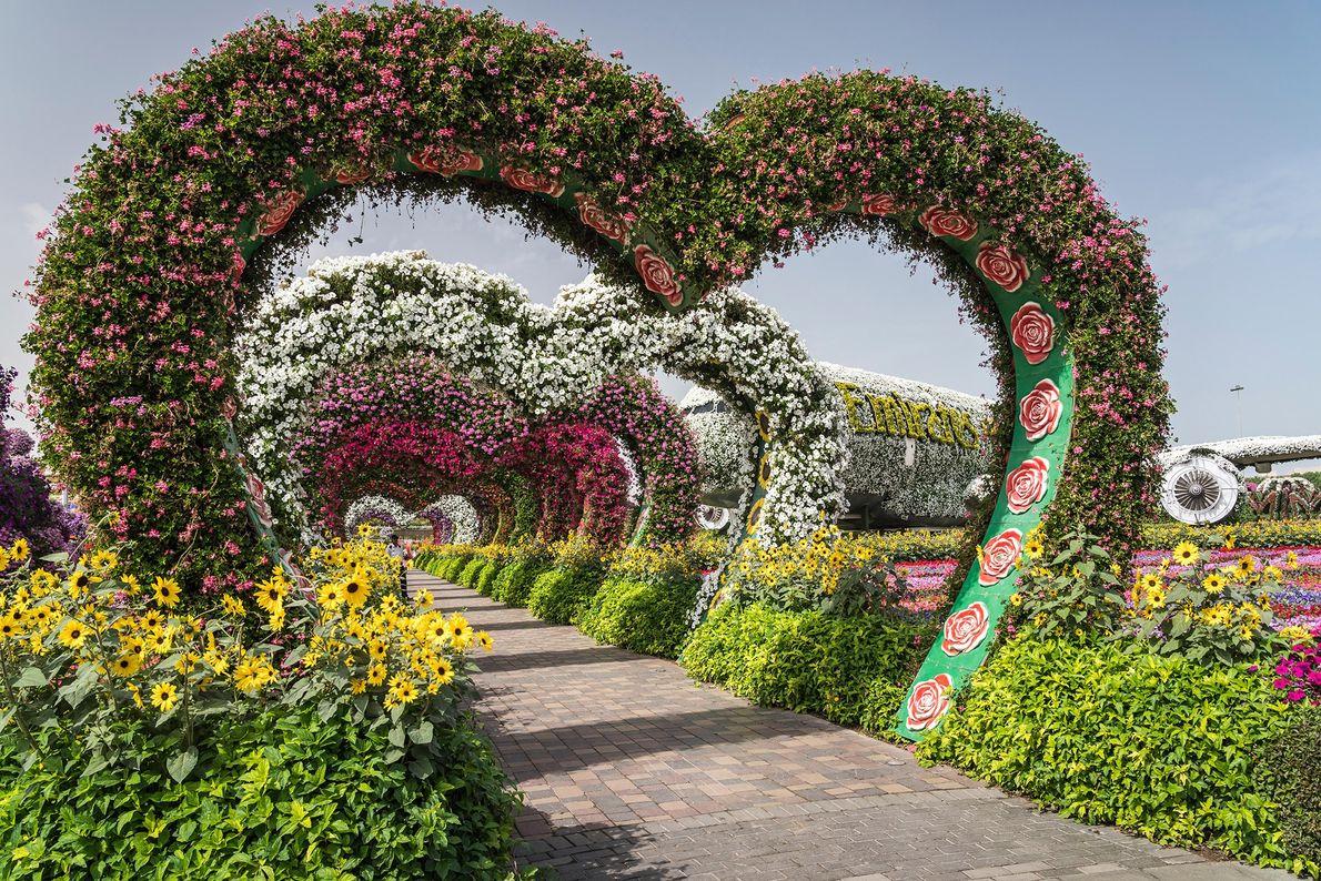 Chaque année, de la mi-novembre à la mi-mai, le Dubai Miracle Garden voit ses 150 millions ...