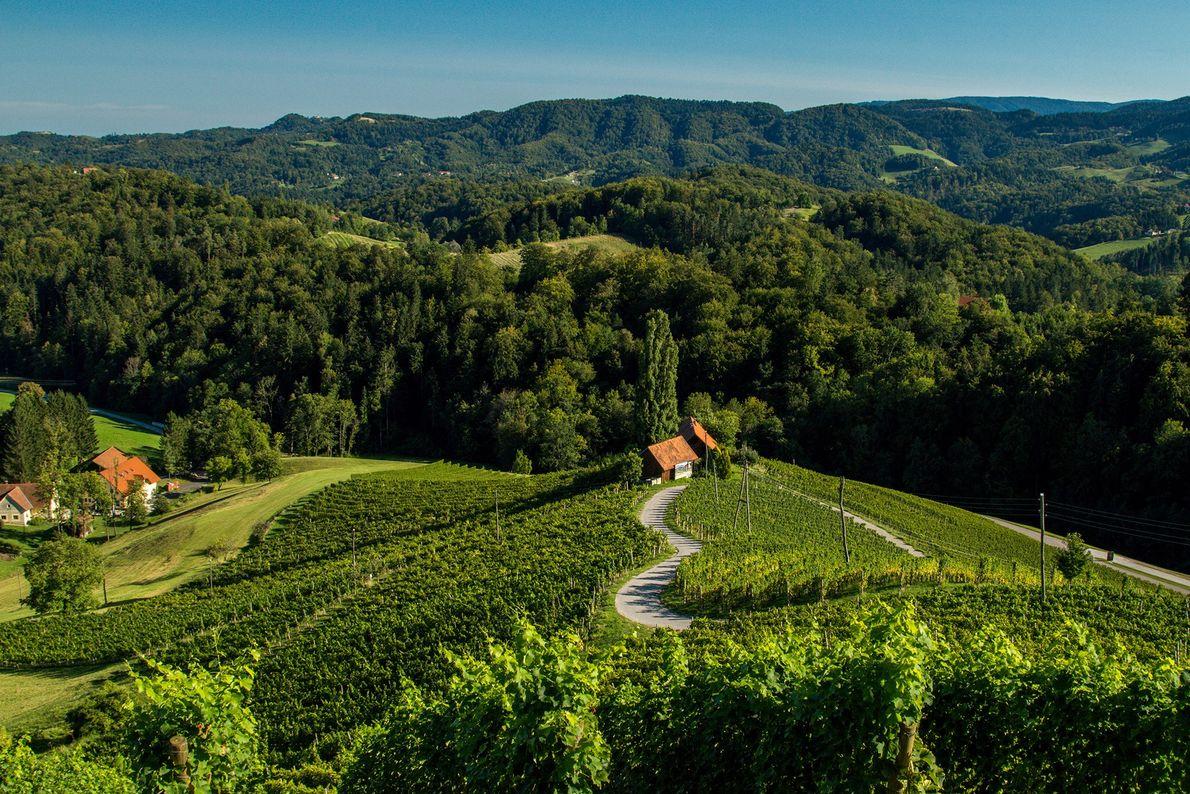 Dégustez le meilleur vin slovène dans la petite ville de Špičnik, célèbre pour sa route sinueuse ...