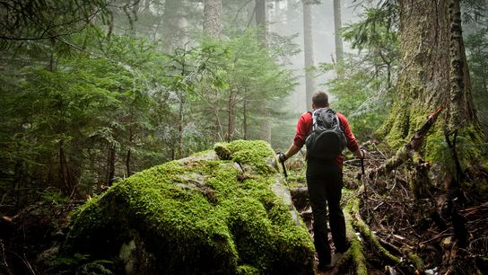 Un randonneur progresse dans une forêt luxuriante recouverte de mousse pour atteindre le lac Deeks près ...