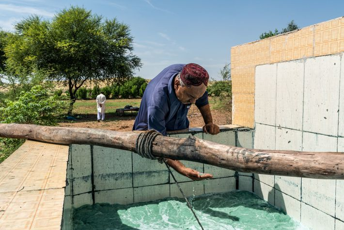 PAKISTAN - Dans sa ferme du Sindh, Abdul Qadir Palari élabore le bleu des jeans à partir de ...