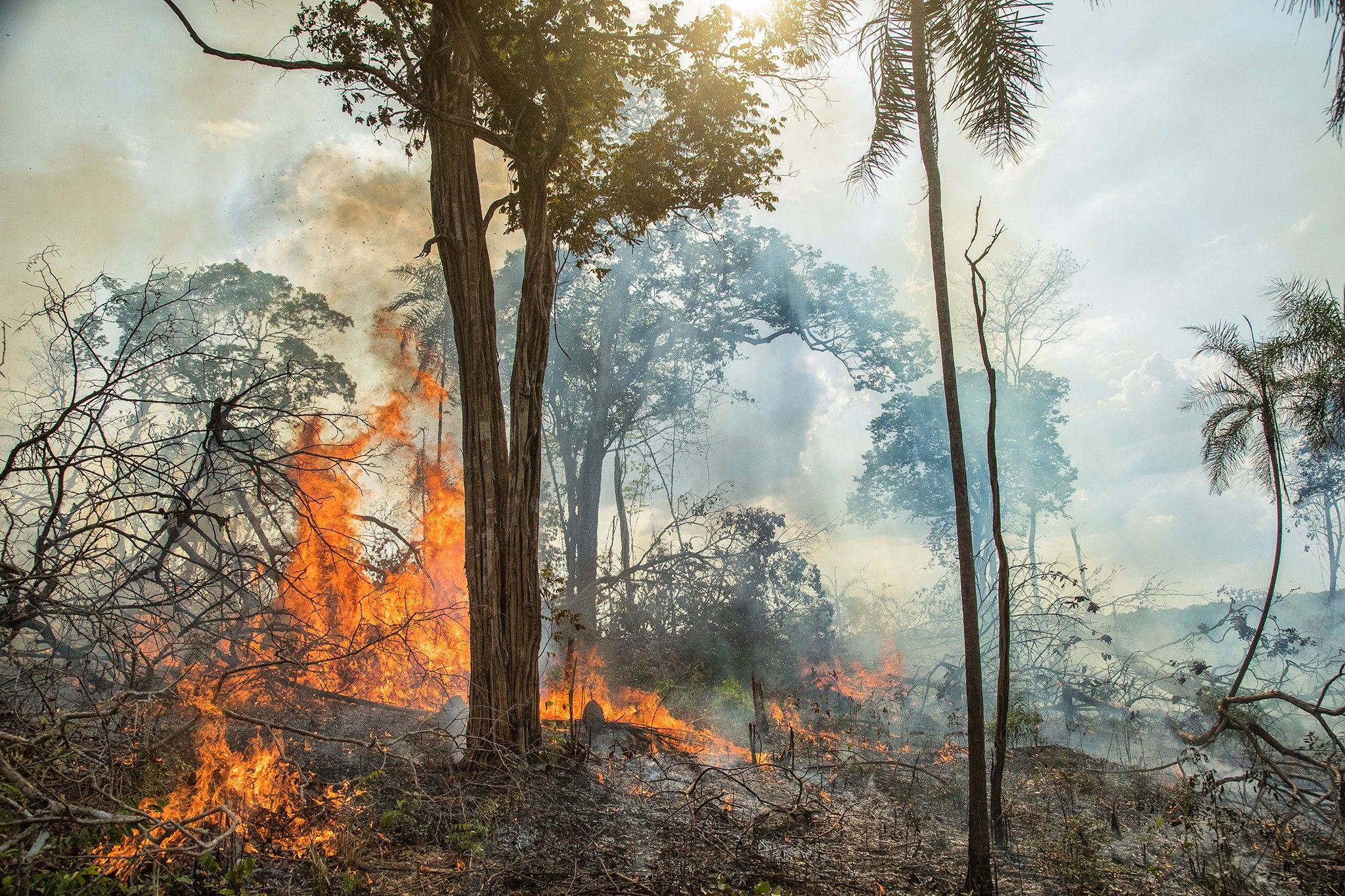 Pourquoi les feux de forêts en Amazonie n'ont rien à voir avec les traditionnels brûlis | National Geographic