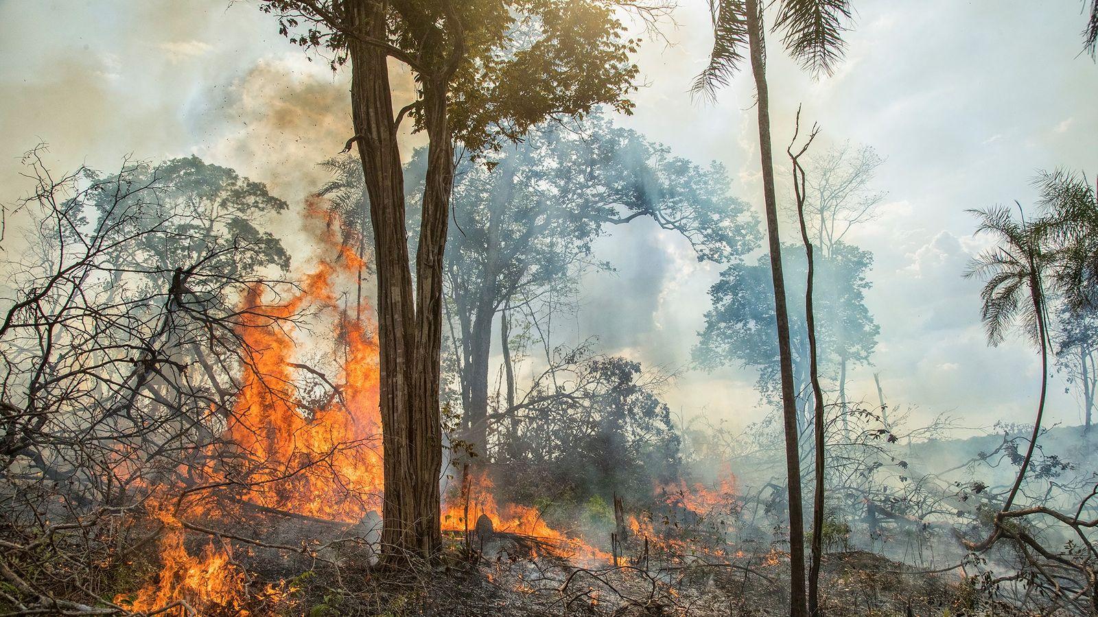 Un feu brûle un champ de manioc dans la partie brésilienne de la forêt amazonienne. Selon ...