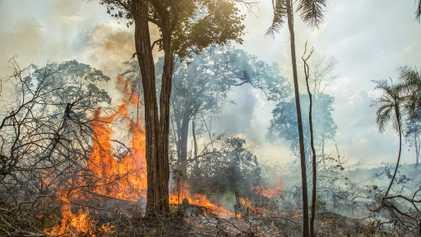 En quoi les feux de forêts en Amazonie diffèrent des traditionnels brûlis