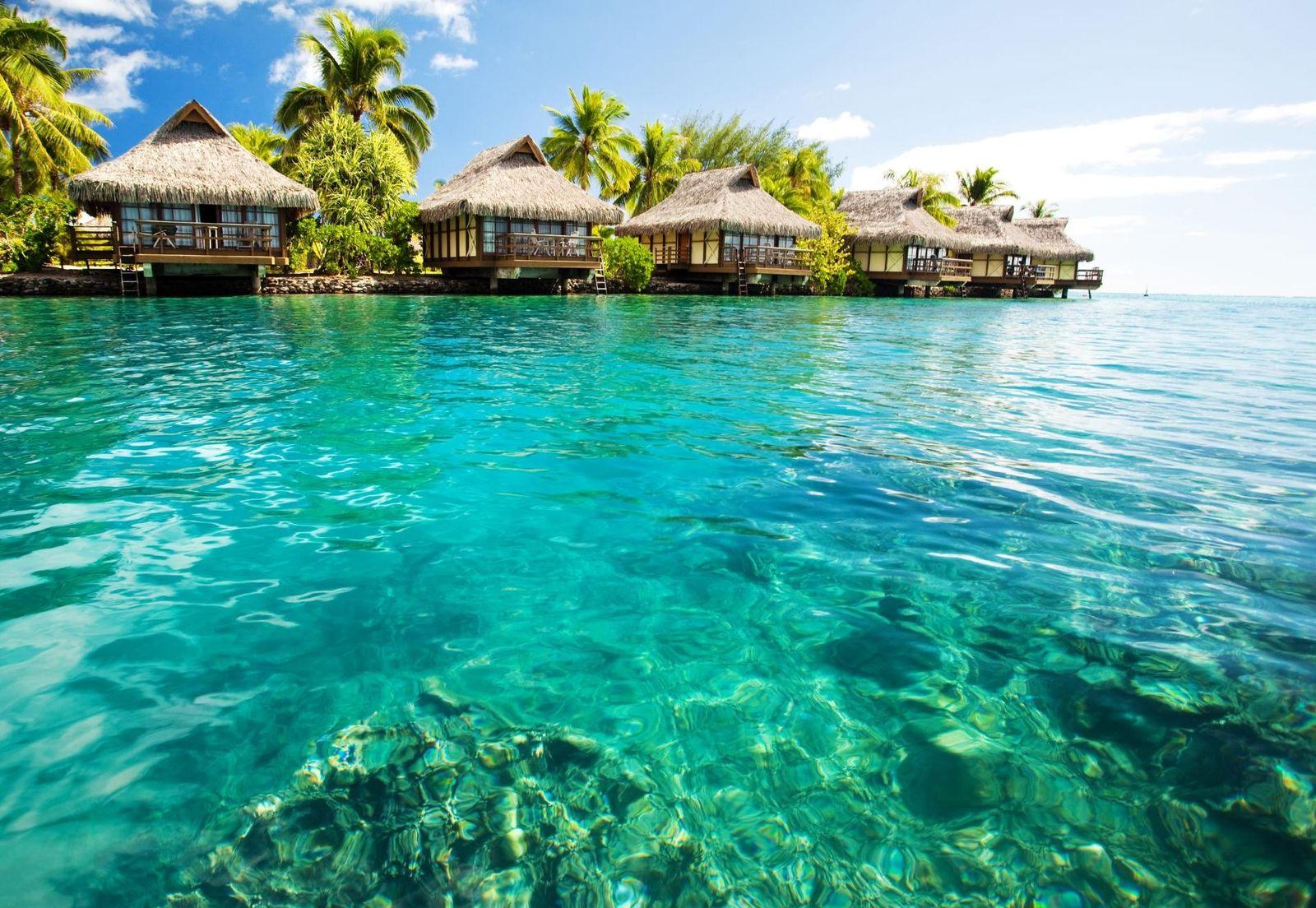 Les bungalows sur pilotis sont installés au-dessus d'un lagon vert aux Maldives.