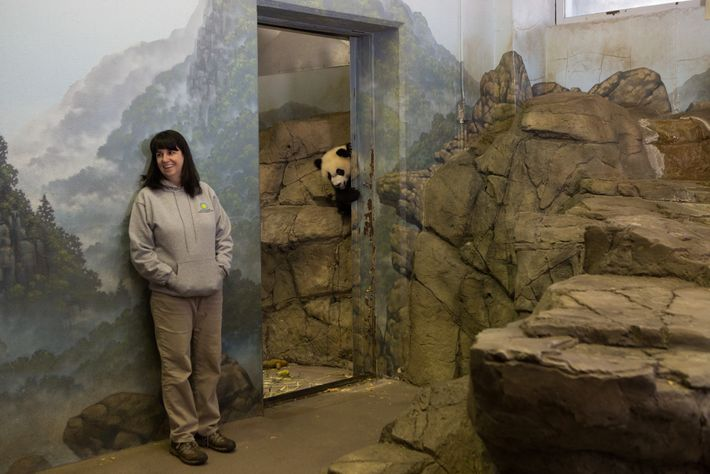 Laurie Thompson, conservatrice adjointe des pandas géants du parc zoologique national de Washington, photographiée aux côtés ...