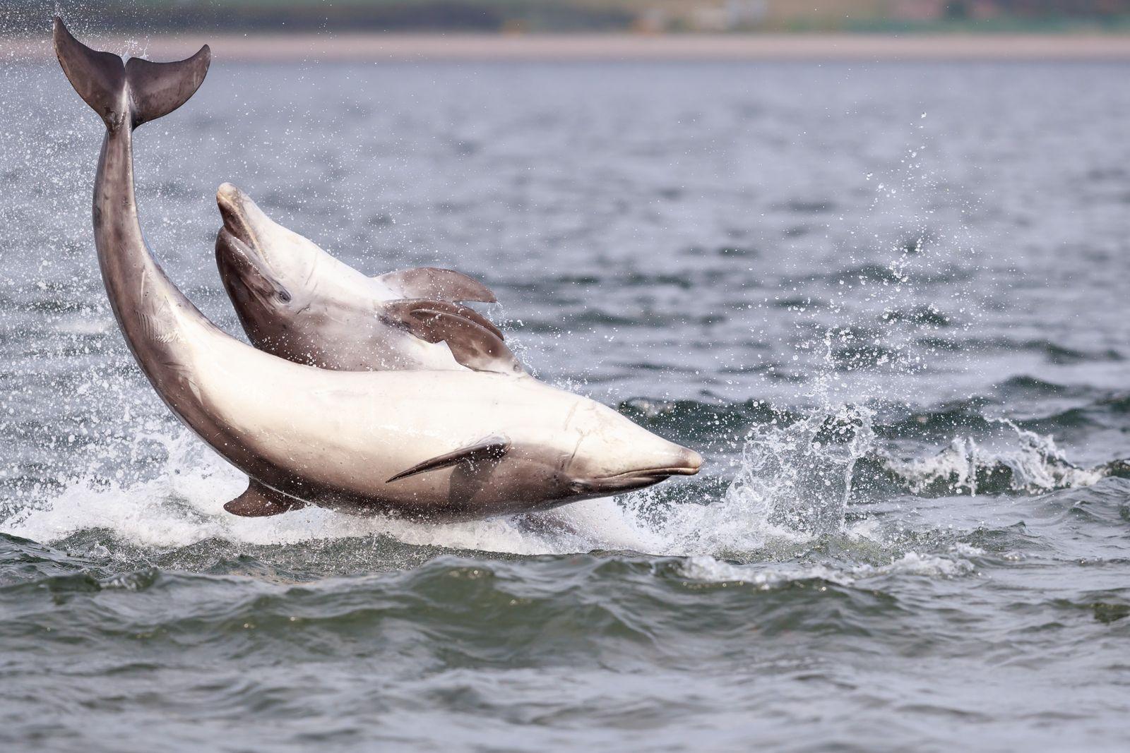 Hécatombe de dauphins sur les côtes françaises depuis décembre 2019