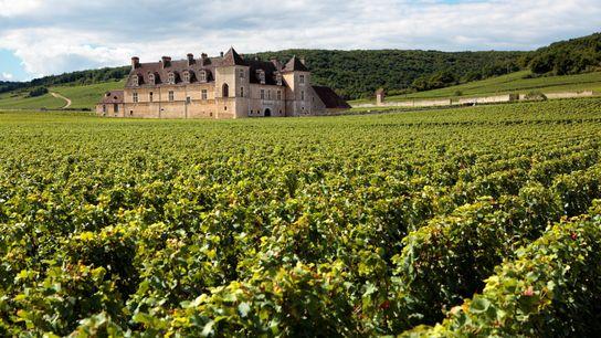 Le domaine du Chateau Clos Du Vougeot, en Bourgogne, France.