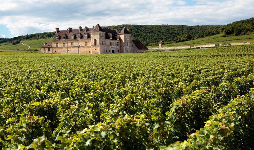 Le vin français change de goût à cause du réchauffement climatique