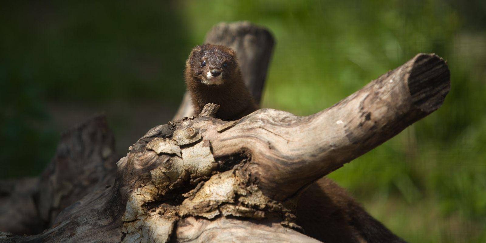 Biodiversité : la faune française continue de s'appauvrir à un rythme alarmant