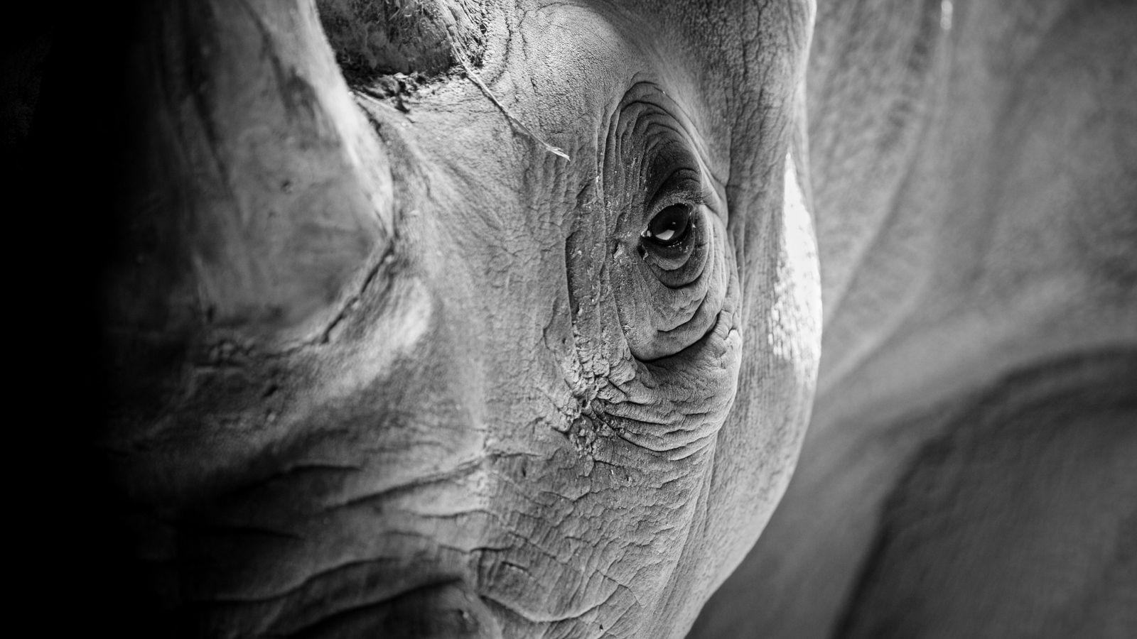 La situation des rhinocéros dans le monde est plus que critique.