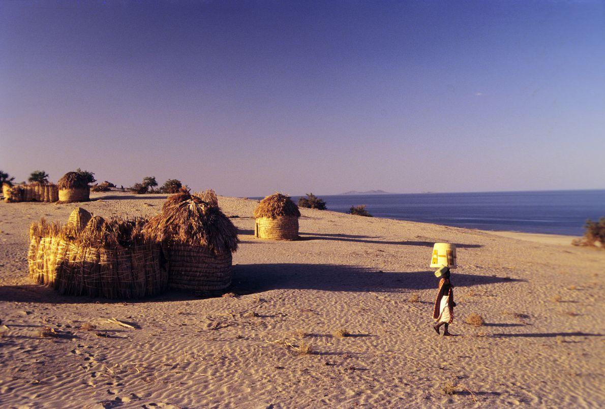 Parcs nationaux du Lac Turkana - Plus salé des grands lacs d'Afrique, le Turkana foisonne d'une ...