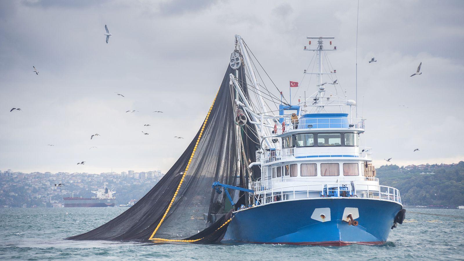 La pêche électrique consiste à placer des électrodes sur des filets assez lourds, traînés à grande ...