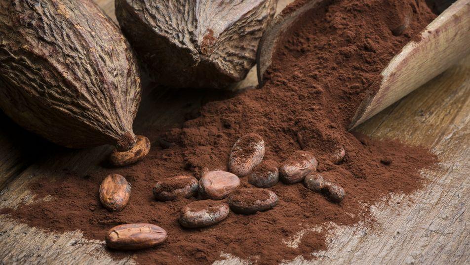 Les cultures de cacao aggravent le phénomène de déforestation en Afrique