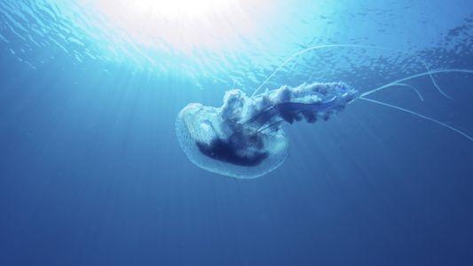 Changement climatique : ce qui attend la biodiversité marine