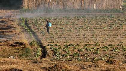Que retenir de l'appel d'Arusha visant à interdire les pesticides dangereux en Afrique ?