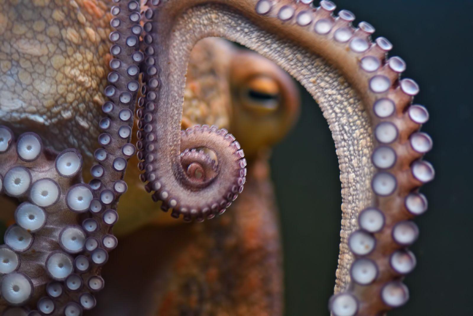 Kraken : le calamar géant qui fit trembler les mers