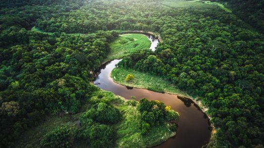 Comment améliorer la qualité de l'eau ? En plantant (beaucoup) d'arbres