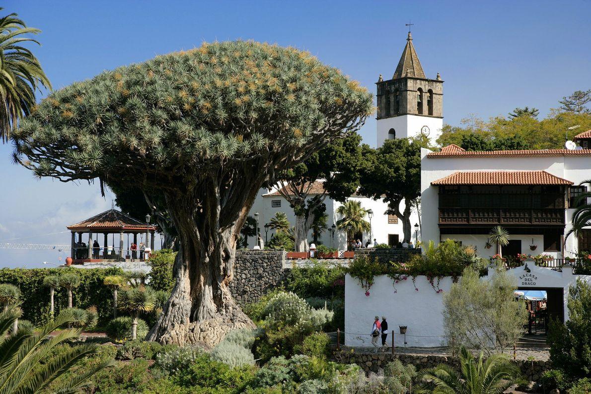 Semblant sorti d'un autre monde, l'arbre El Drago, également connu sous le nom de Drago Milenario ou ...