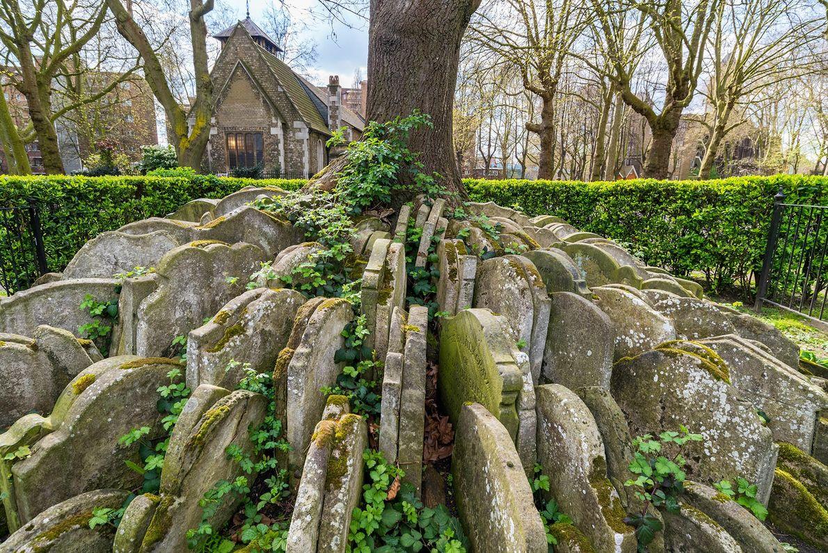 Cet arbre maudlin se trouve près de la vieille église St. Pancras à Londres, encerclé par ...