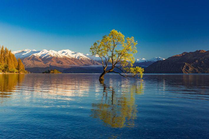 Semblant prendre racine dans les profondeurs du lac Wanaka en Nouvelle-Zélande, ce saule a attiré l'attention d'innombrables visiteurs ...
