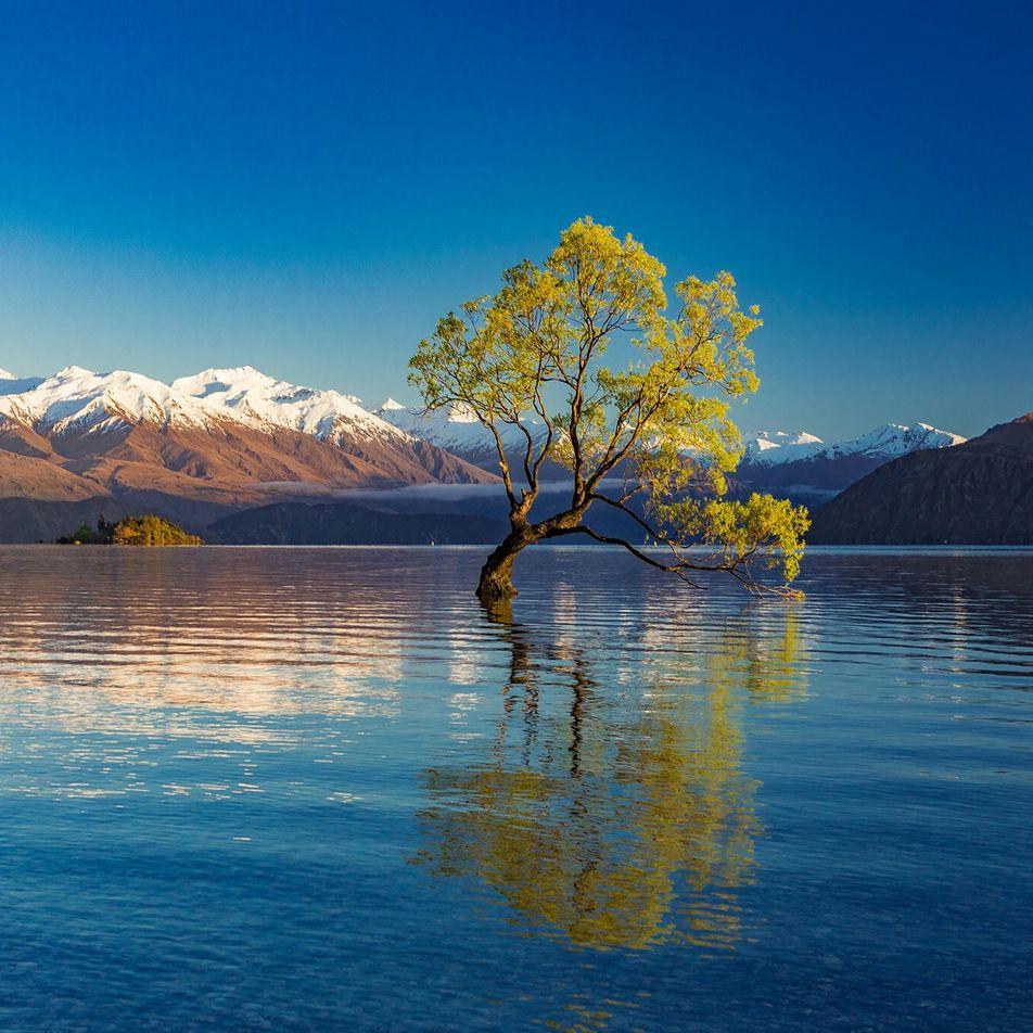 Les arbres les plus impressionnants du monde