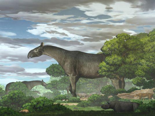 Il y a 26,5 millions d'années, une espèce de rhinocéros géant parcourait l'Asie centrale