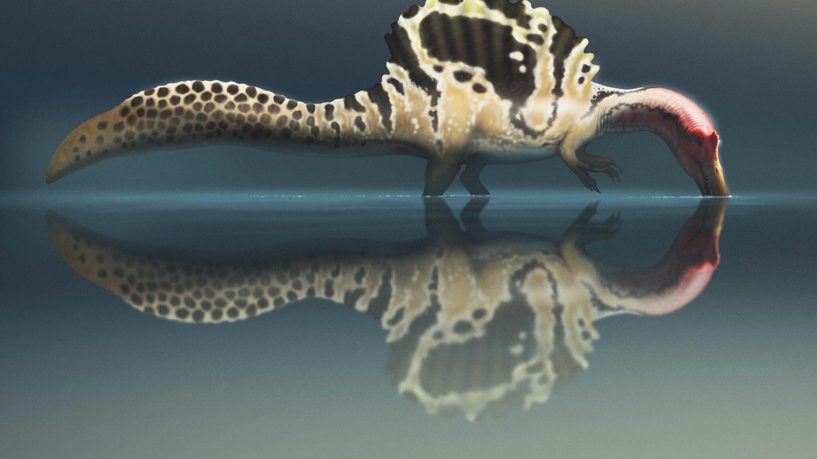 Le spinosaure était-il un « monstre des rivières » réellement capable de nager ? Dans le dernier volet d'un ...