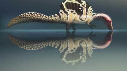 Monstres des rivières ou simples échassiers, comment chassaient les spinosaures ?