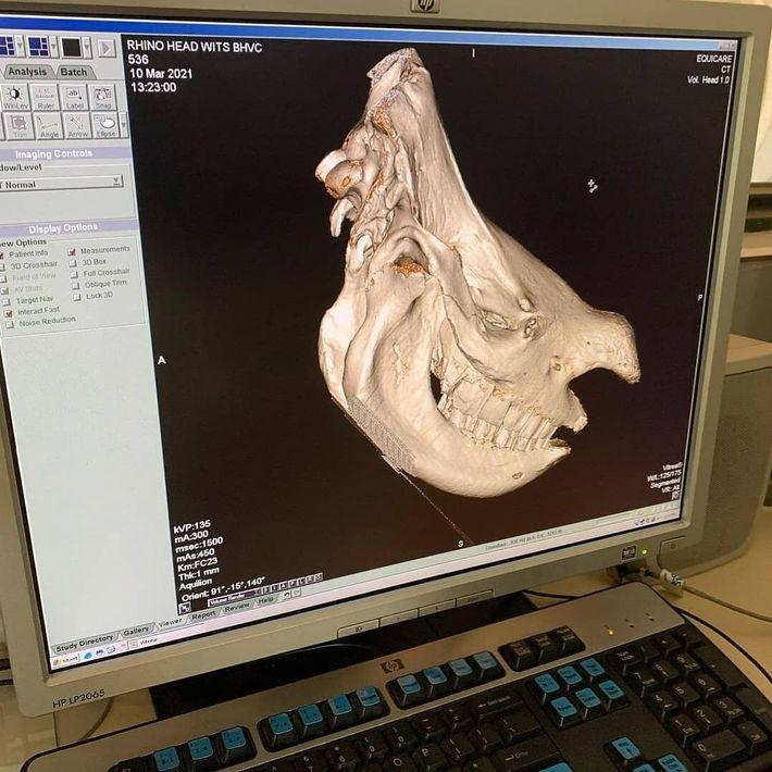 Tête de rhinocéros 3D, par The Rhisotope Project.