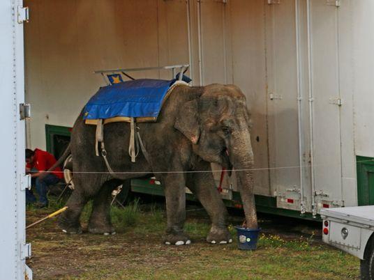 Les éléphants de ce zoo itinérant ont souffert pendant des années avant de mourir