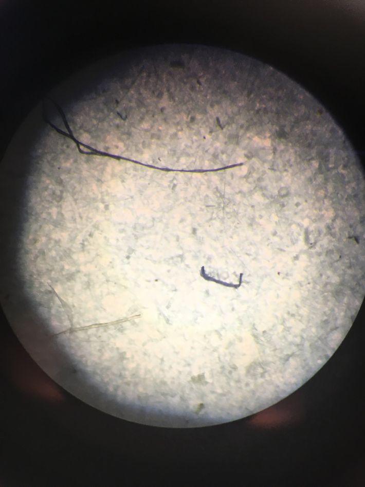 Des fibres de microplastiques observées au microscope.