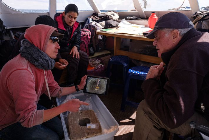 Le directeur du projet, Christophe Delaere, et d'autres membres de l'équipe, partagent leurs découvertes avec l'archéologue ...