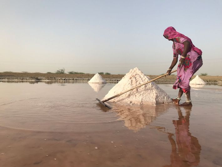 Une paludière travaille dur dans une saline près de la ville de Jaipur, située au Rajasthan.