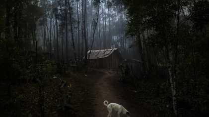 Au Brésil, le coronavirus fait des ravages chez les tribus amazoniennes