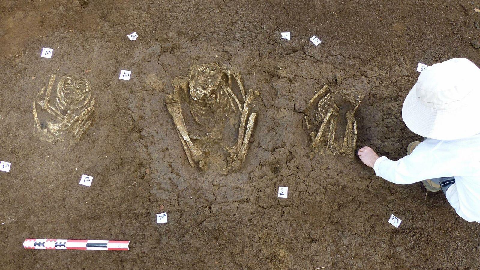Mise au jour de trois sépultures précolombiennes - Petit-Pérou, les Abymes (Guadeloupe).