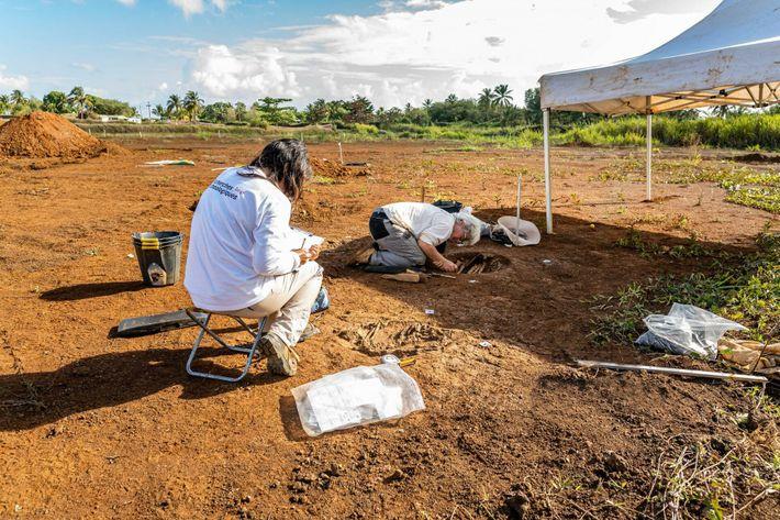 Enregistrement de la sépulture 59 et fouille manuelle de la sépulture 60, les Abymes, Petit-Pérou.