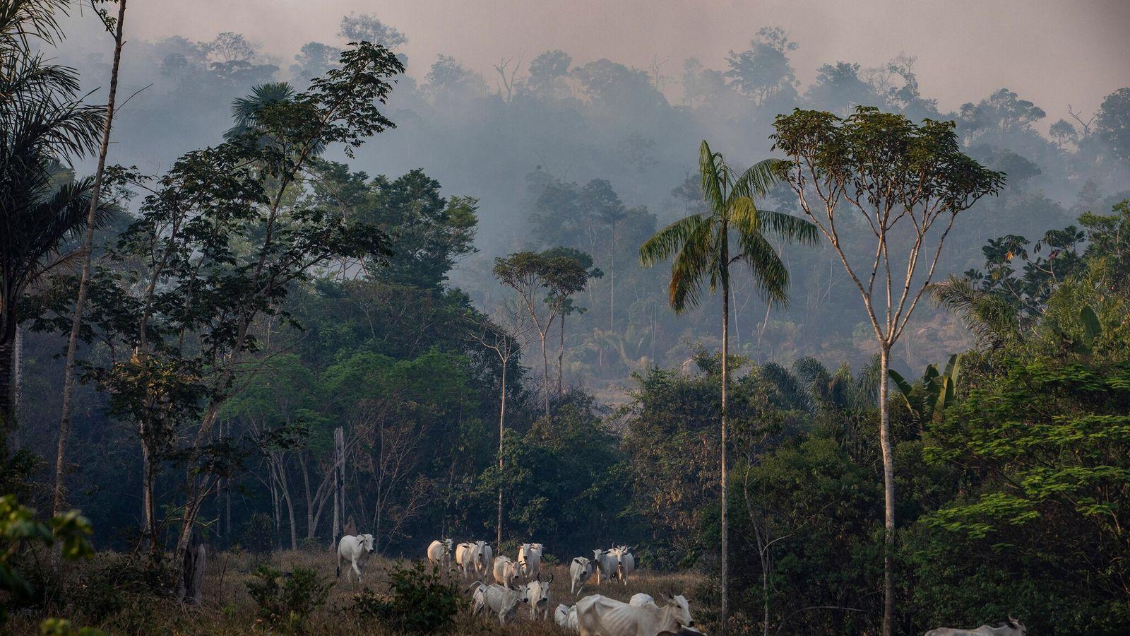 La fumée épaissit le ciel au-dessus de ce ranch dans l'État brésilien du Mato Grosso en ...