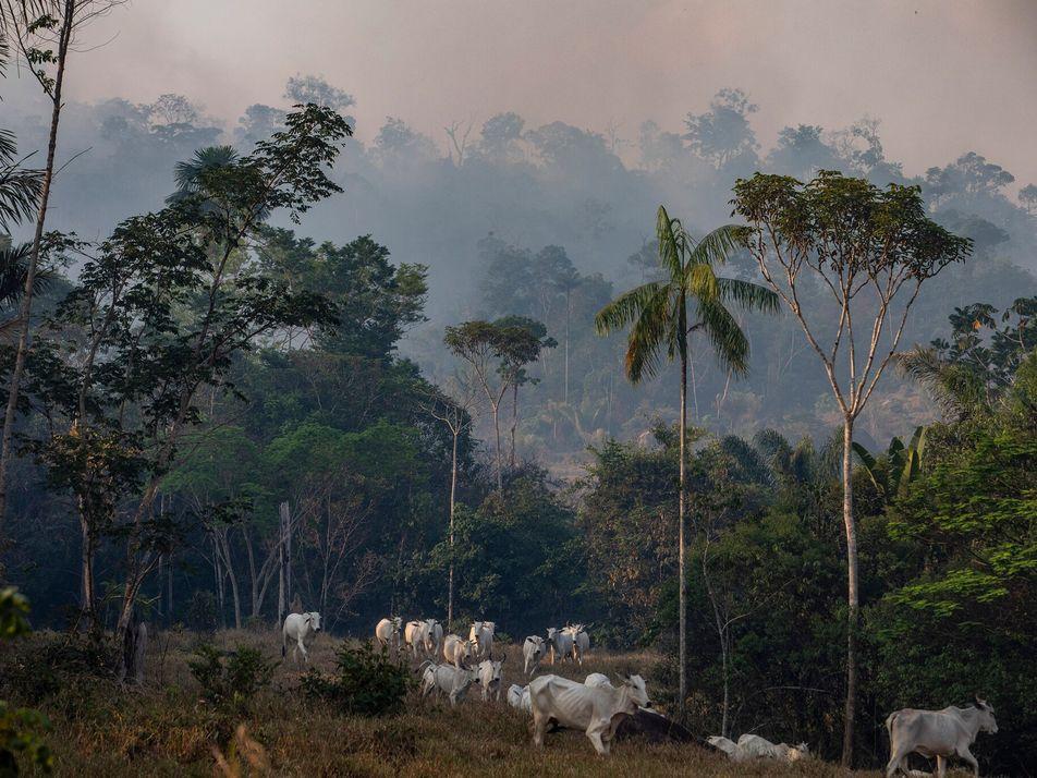 Mieux protéger la nature et les animaux permettra d'éviter de futures pandémies