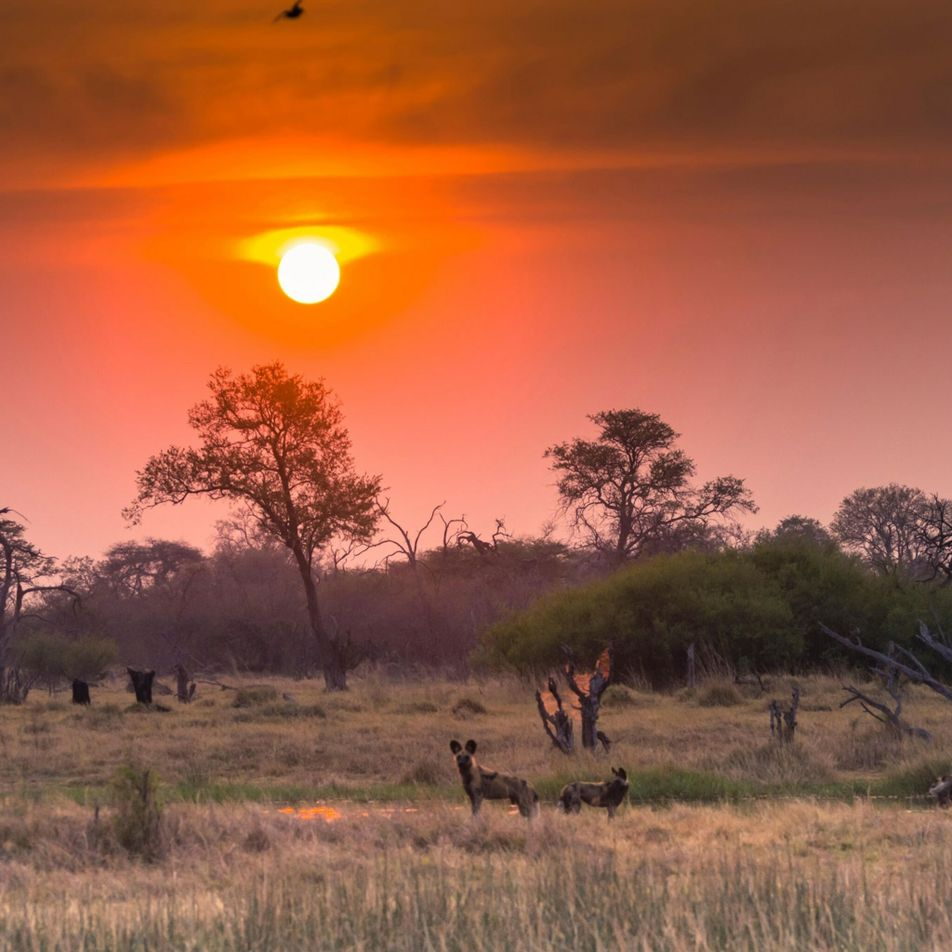 Namibie : une campagne de forages pétroliers menace le delta de l'Okavango