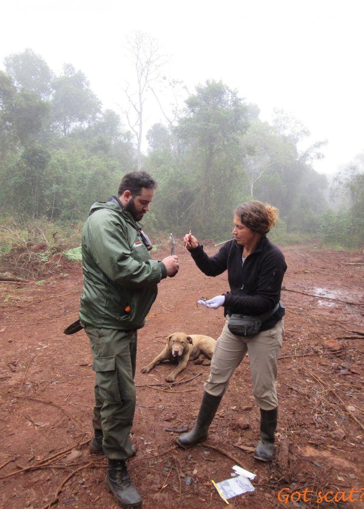 Karen DeMatteo, auteure principale de l'étude, et un garde de la réserve de la Biosfera Yaboti ...