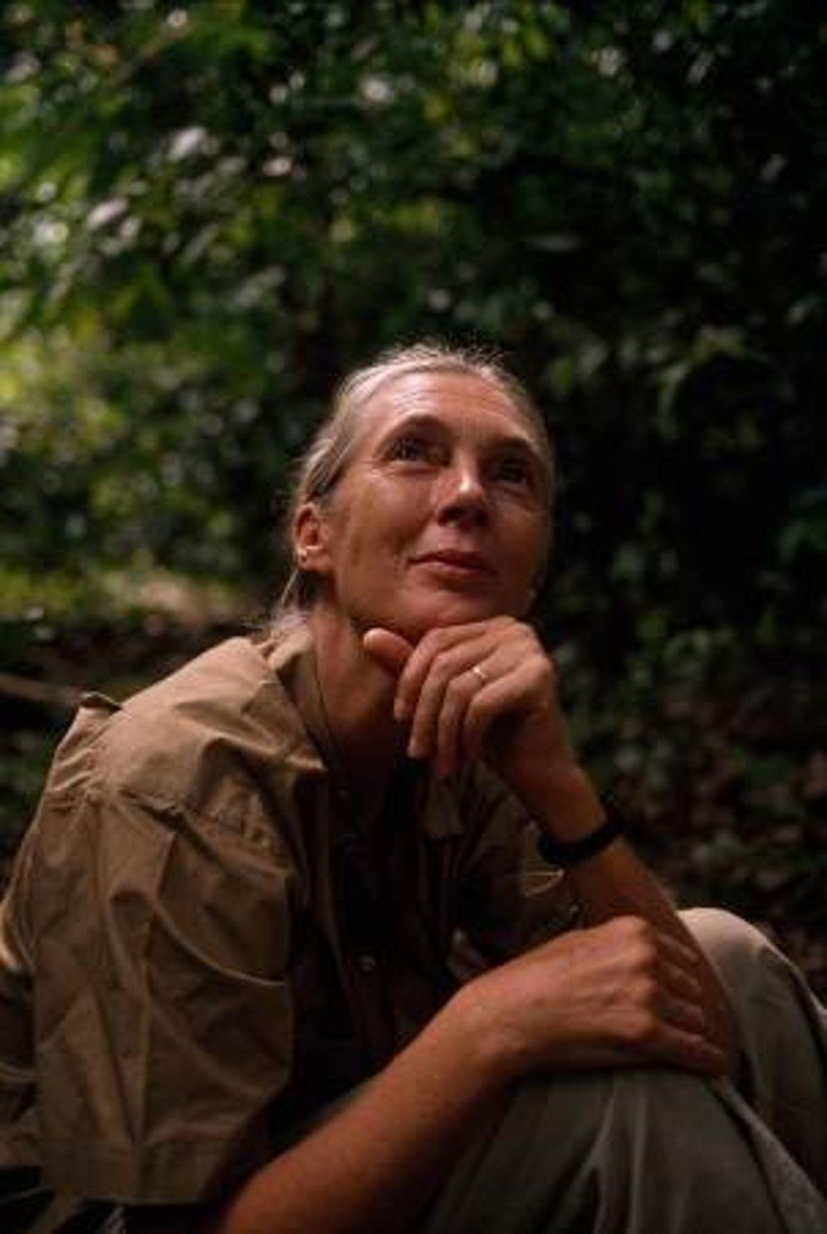 La primatologue Jane Goodall étudie les chimpanzés de Gombe depuis 1960, elle est donc responsable de ...
