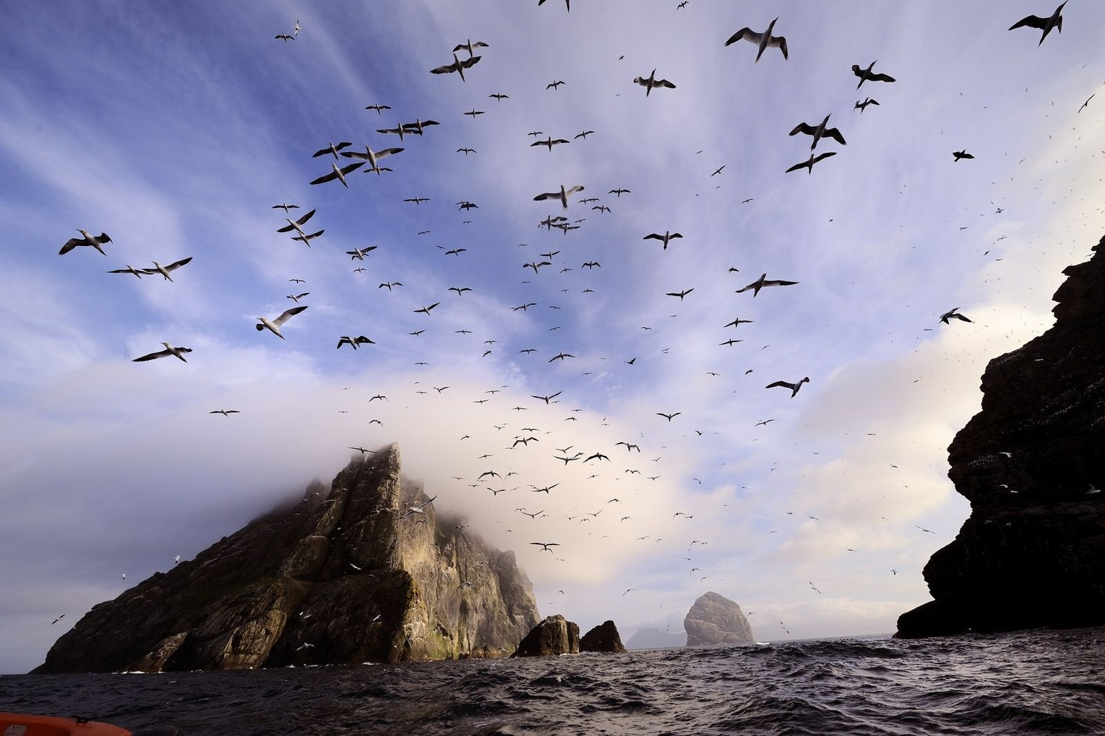 Sur l'île de Boreray, des fous de Bassan prennent leur envol au cours d'une brève éclaircie. ...