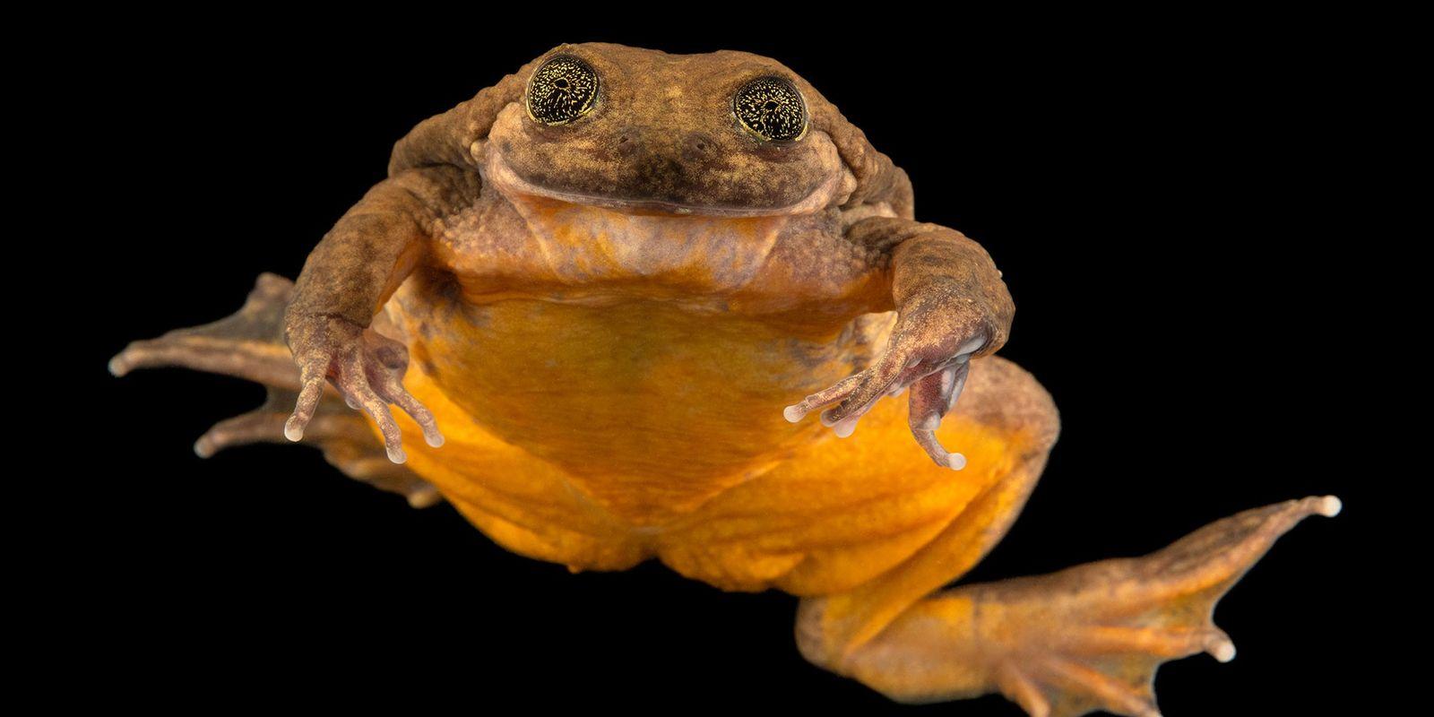 Roméo, la grenouille solitaire, a enfin trouvé sa Juliette