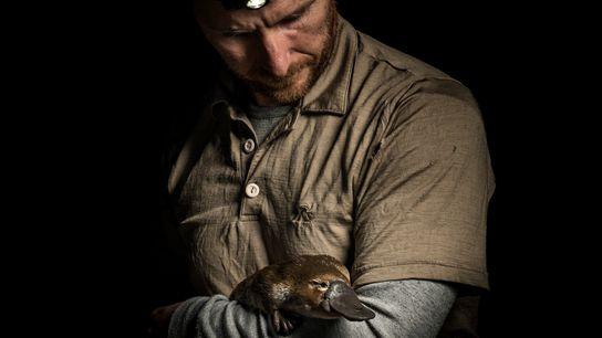 Josh Griffiths, écologue et chercheur spécialisé dans les ornithorynques, tient dans ses bras une femelle qu'il vient ...