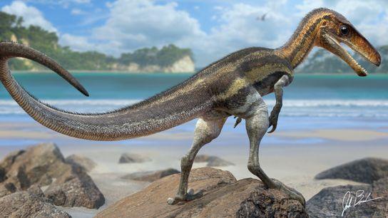 Des écailles en bon état de conservation provenant de la queue d'un Juravenator, un petit dinosaure ...