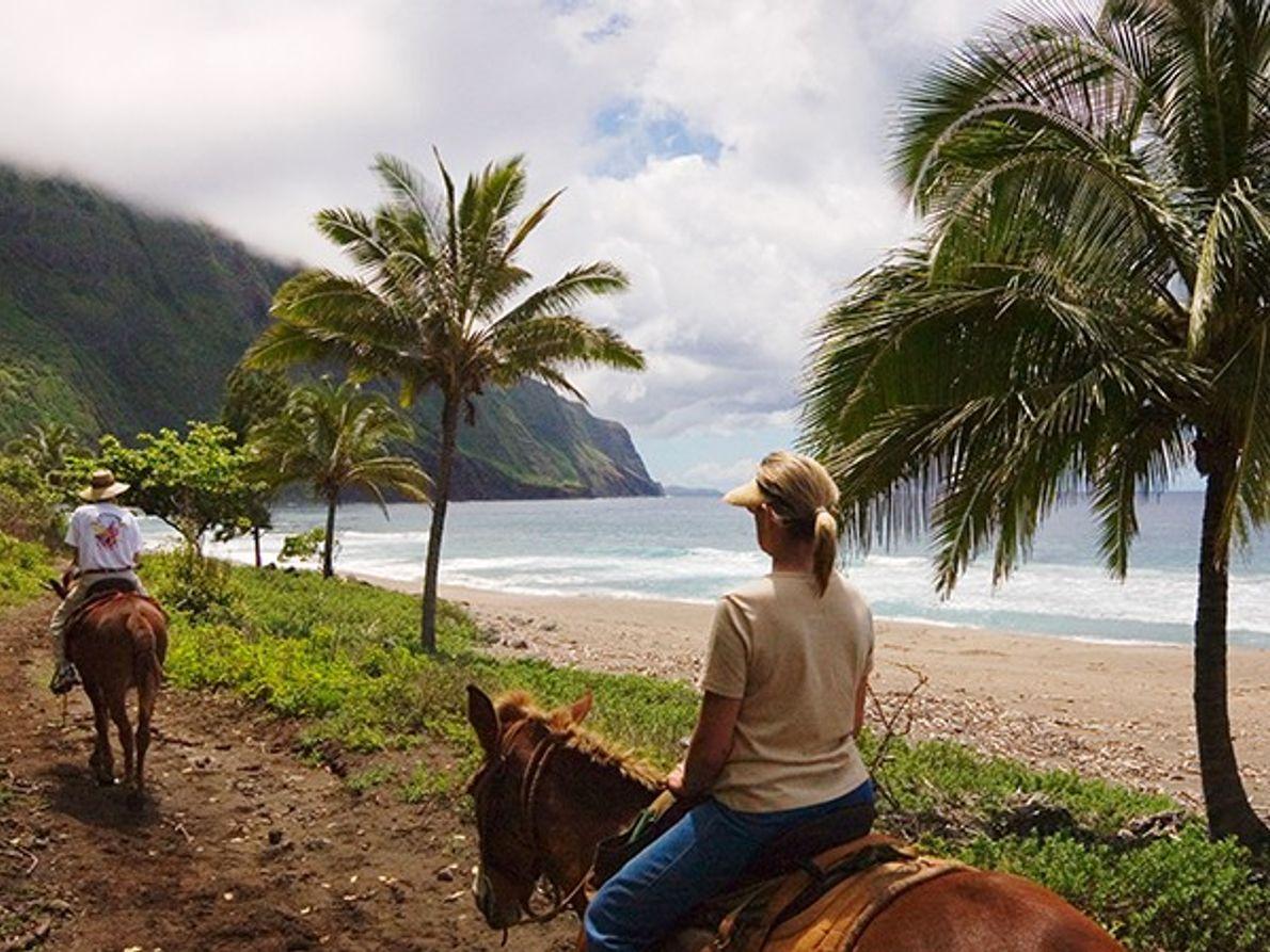 Balade à dos de mulet  sur une côte historique, Molokai