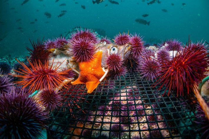 urchins and fish