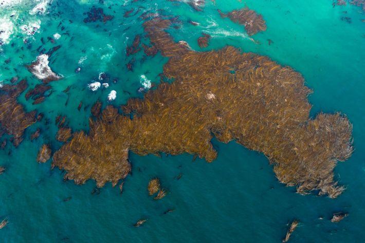 kelp forest coast